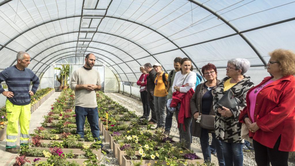 Centre technique municipal (CTM). Visite des serres municipales par les gagnants du concours de fleurissement